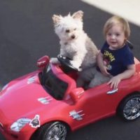 Dog and Child in car